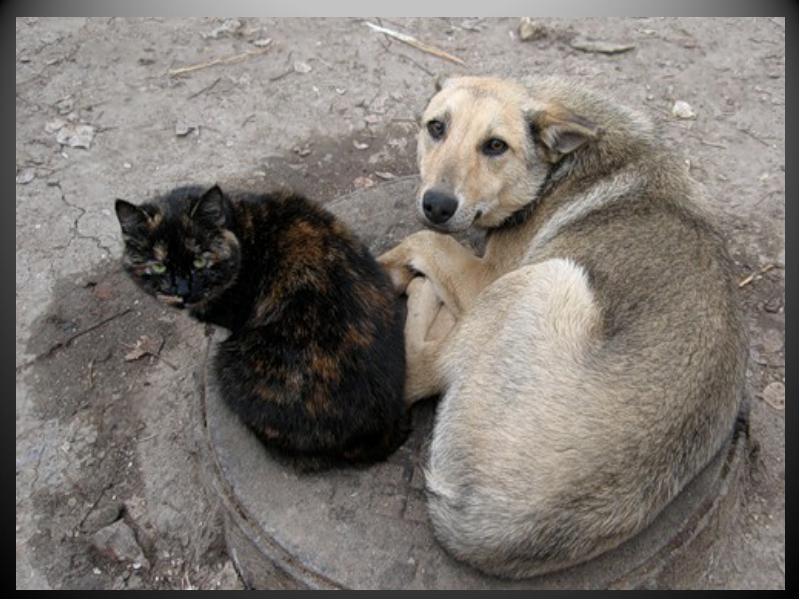 В мэрии Кишинева состоялись первые публичные обсуждения по бездомным животным