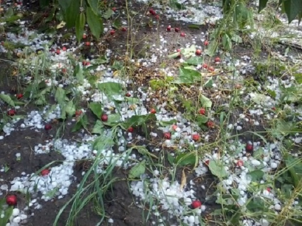 Сотни гектаров садов и посевов уничтожены ливнем и градом в Унгенском и Сорокском районах