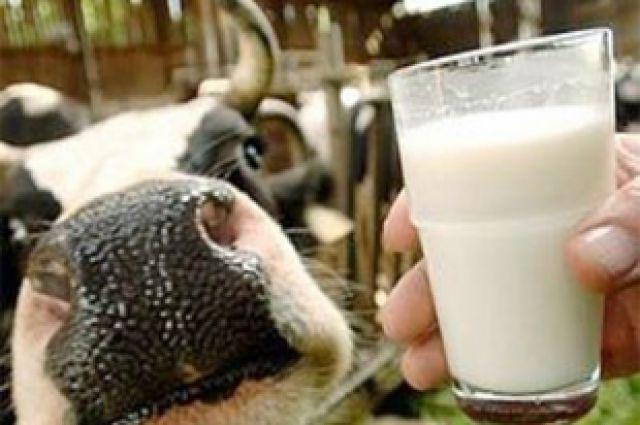 Благо или вред? Мифы о пользе молока