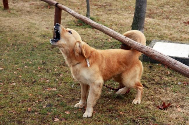 Что делать если у соседей скулит собака