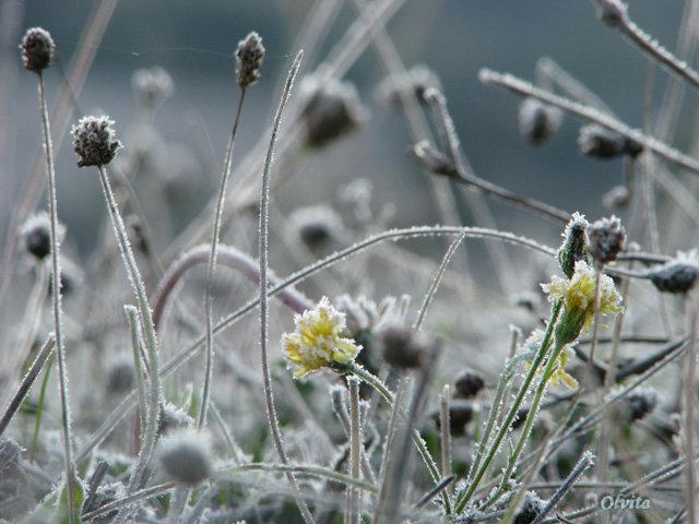 На следующей неделе в стране похолодает до -10