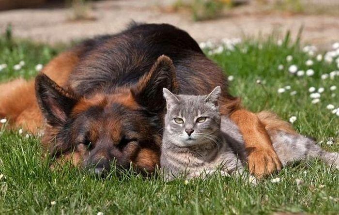 Зоозащитники представили проект «О содержании домашних животных»