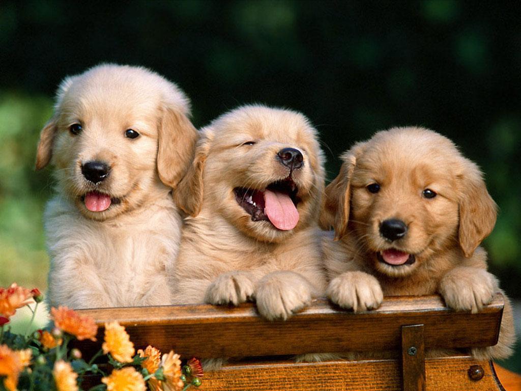 Можно ли разводить собак в квартире?