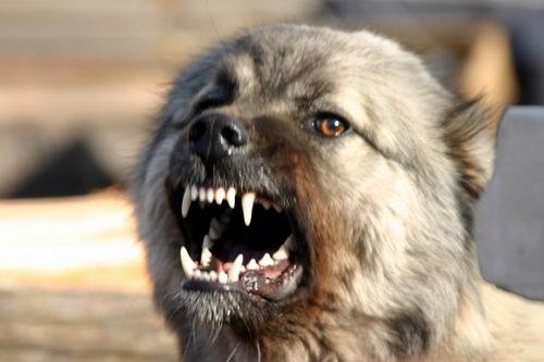 В Резинском районе собаки растерзали девушку