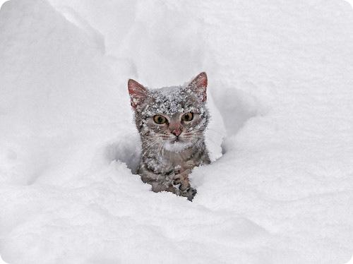 Синоптики обещают похолодание и снег