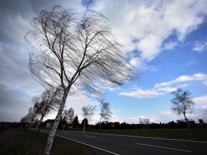 Из-за сильного ветра в Молдове объявлен желтый код опасности