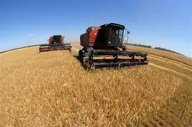Фермеры соберут пшеницы на 40  процентов меньше, чем в 2014 – м
