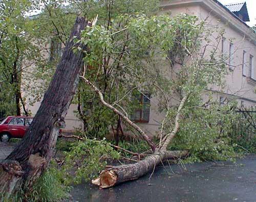 На многоэтажный дом в Кишиневе упало дерево
