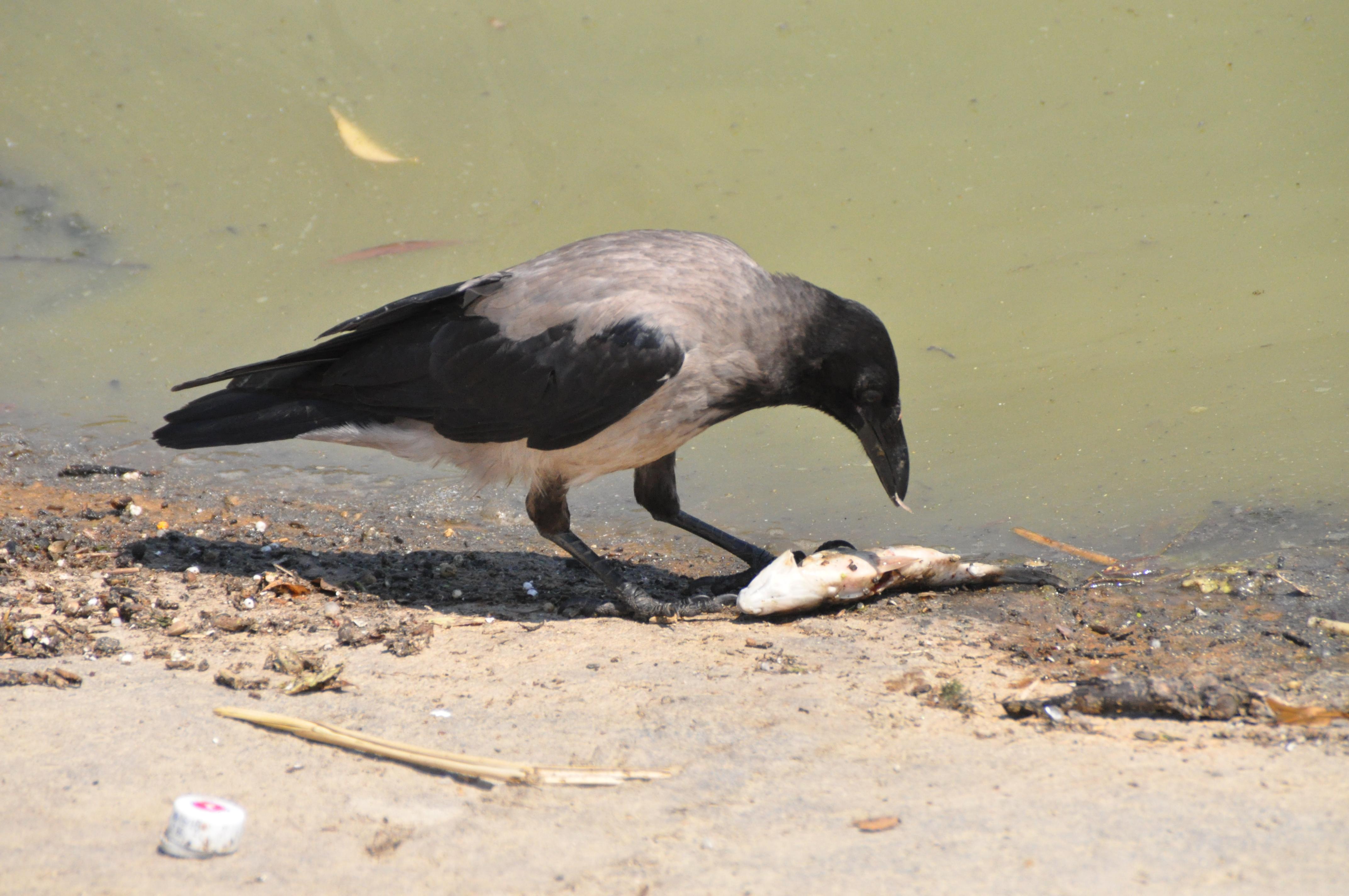 В озере Валя Морилор снова начала умирать рыба (фото – факт!)