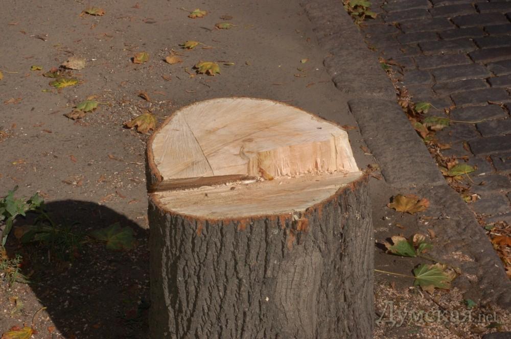 В Кишинёве вырублены деревья под очередное строительство