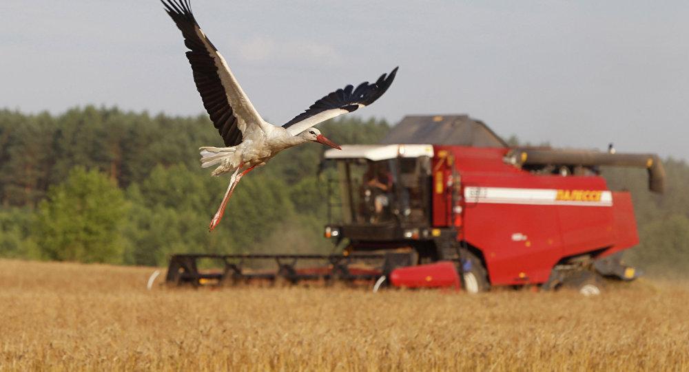 Кризис в сельском хозяйстве может обернуться массовыми банкротствами