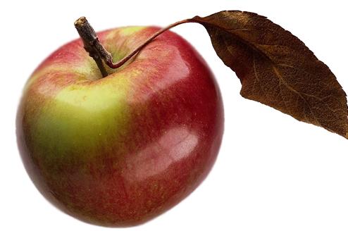 Урожай яблок и винограда в 2015 году меньше на треть