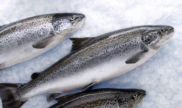 Около 500 килограмм рыбы не попали на кишинёвские рынки