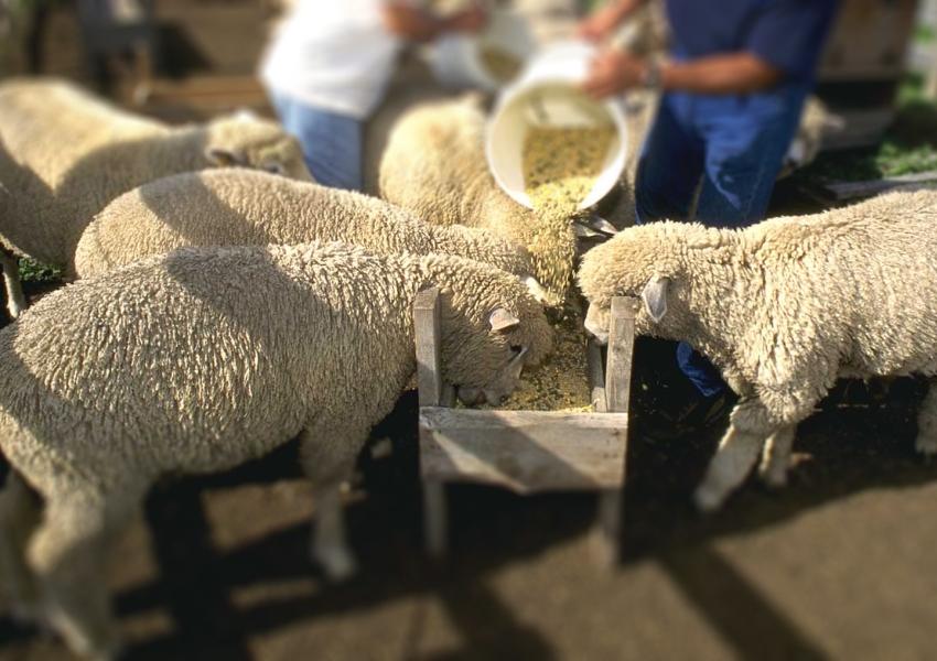 Какая пищевая добавка полезна для животного?