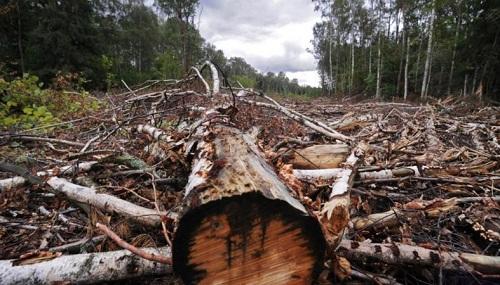 Еще одна АЗС появится на месте вырубленного парка