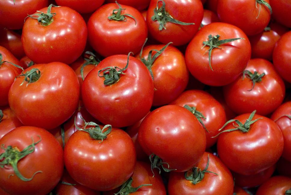 В конце июня на молдавских рынках появятся первые помидоры, выращенные в открытом грунте