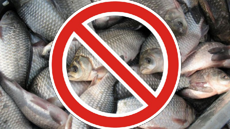 Объявлен 70-дневный запрет на рыбалку