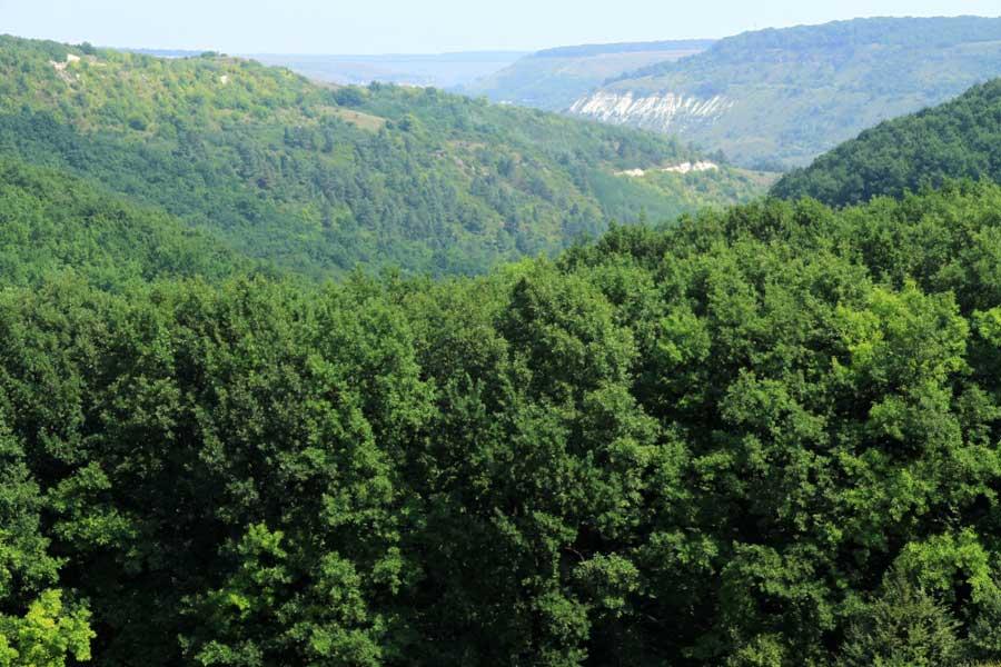 Внимание: леса Молдовы подвергнутся химической обработке