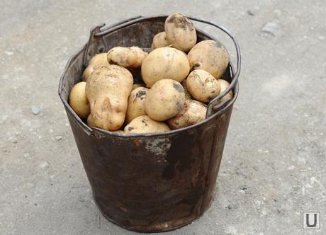 Додон о росте цен на картошку и топливо: Картельный сговор и издевательство над людьми! (ВИДЕО)
