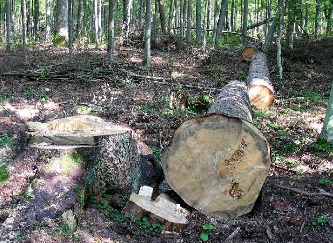 20-Вырубка леса-01