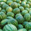 Напичканные нитратами и пестицидами арбузы и дыни обещают ликвидировать