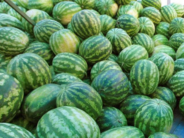 Сезон отравлений арбузами открыт: сколько нитратов содержится в любимой ягоде (ВИДЕО)