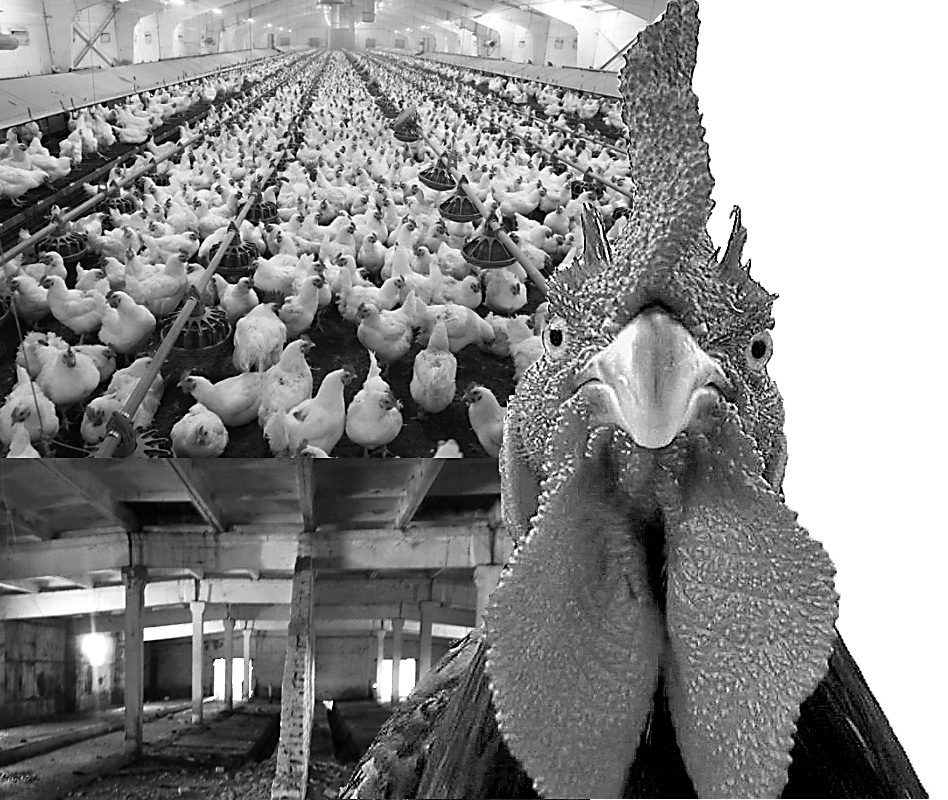 Птичий крах