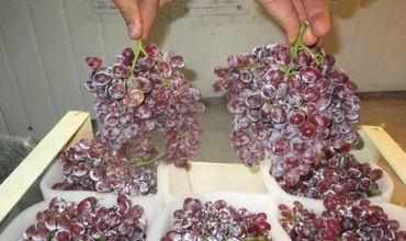 Россельхознадзор вновь пресек попытку импорта в Россию псевдомолдавской сельхозпродукции
