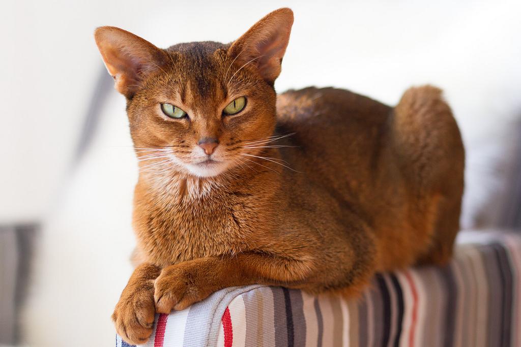 Ежегодно восьмого августа отмечается Всемирный день кошек