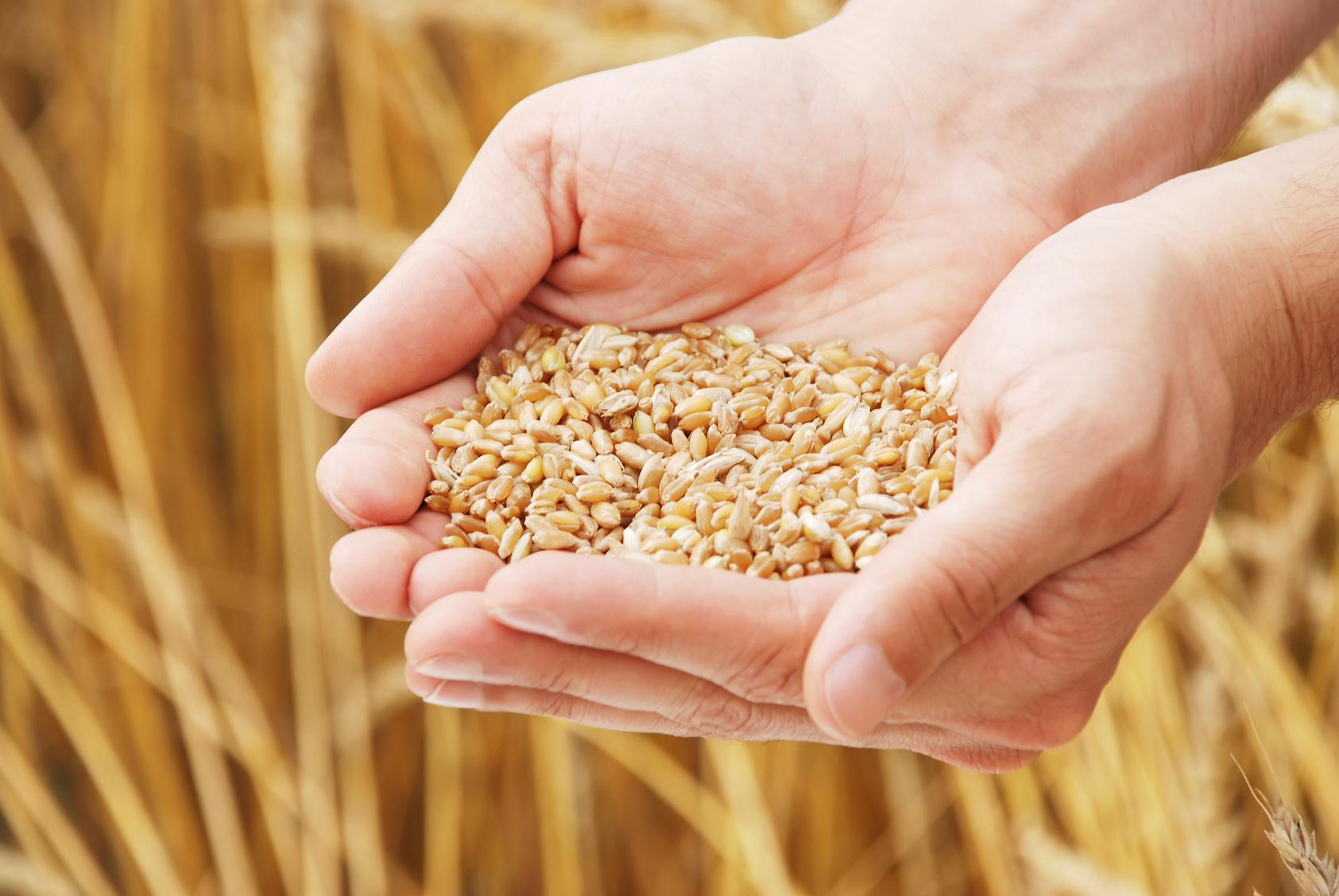 Пержу: Продовольственная безопасность Молдовы будет обеспечена!