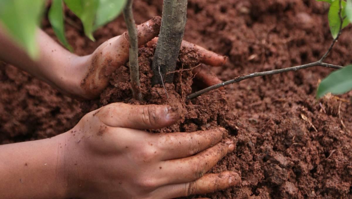 Договор подряда на посадку деревьев на земельном участке.