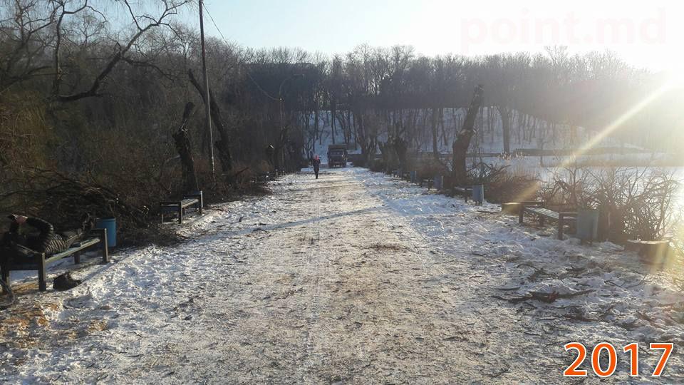 Не утихают споры вокруг вырубки деревьев в Кишинёве