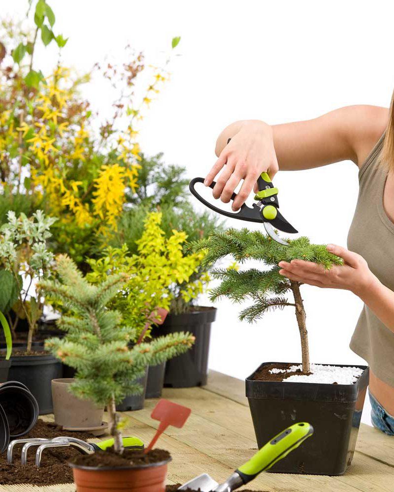 Как сочетать растения?