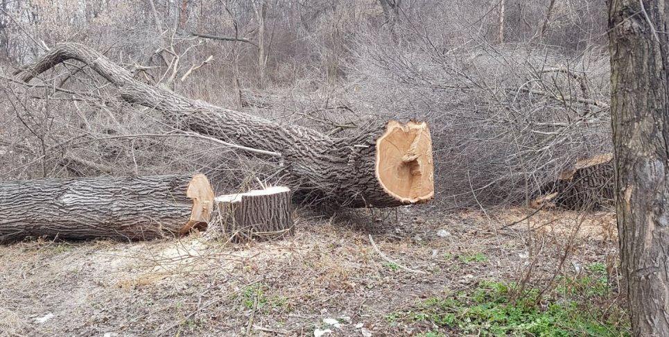 Сюрприз к празднику от мэра: уничтожена часть парка на Рышкановке