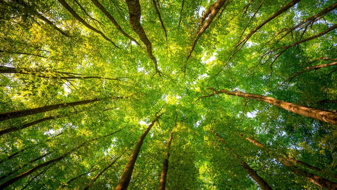 Кому в лесу жить хорошо?