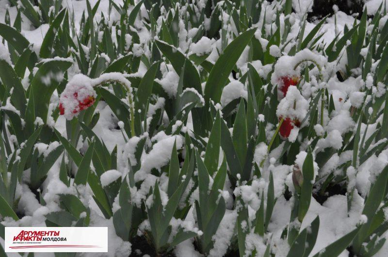 В Молдове ожидаются аномалии: снег, метель и сильный ветер в марте