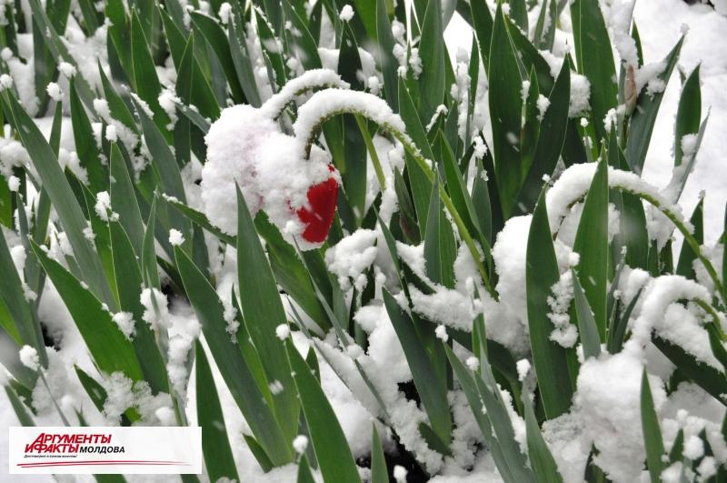 Кишинёв накрыло апрельским снегом