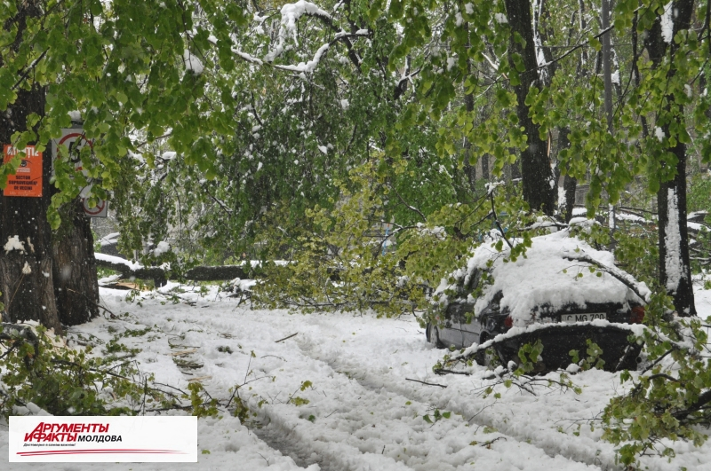 В Кишинёве пройдет Единый день благоустройства территории