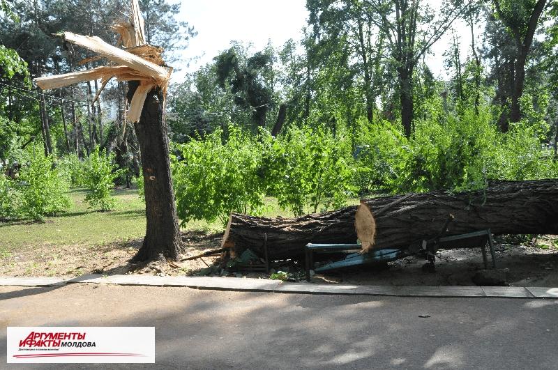 Непогода нанесла серьезный ущерб городскому хозяйству Кишинёва