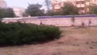 Цветы на Мемориале портят мрамор, лисы раскапывают дамбы, а крысы в Кишинёве – за-за того, что мы кормим голубей!
