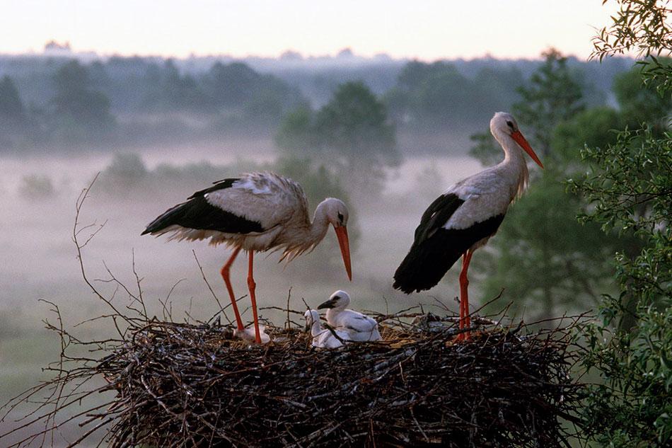 В Молдову прилетели аисты: среди них был замечен даже редкий вид, занесённый в Красную книгу (ВИДЕО)