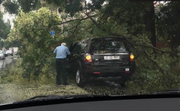 В Кишиневе на едущий автомобиль рухнула ветка (ФОТО)
