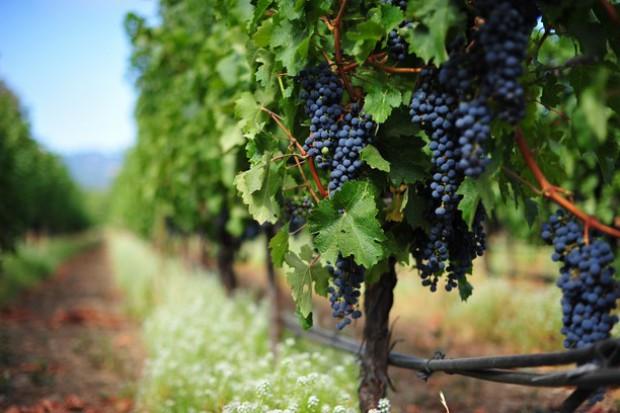 Сегодня жителей и гостей столицы приглашают на ярмарку молдавского винограда