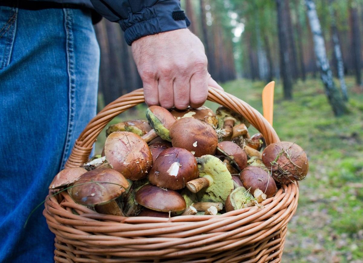 В Молдове 11 взрослых и трое детей попали в больницу, отравившись грибами