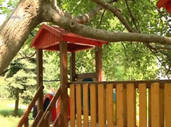 Огромное дерево рискует упасть на детскую площадку на Чеканах