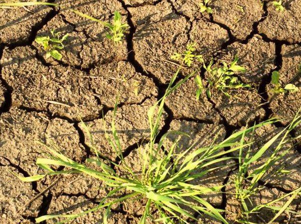 Синоптики объявили новый «жёлтый код» в связи с засухой