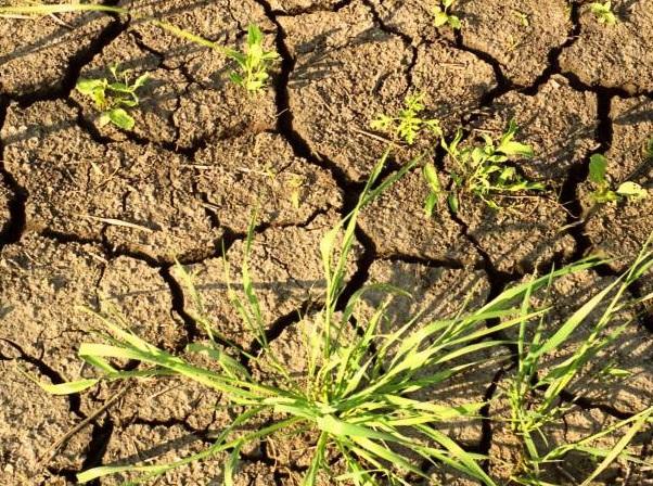 """""""Жёлтый код"""" в связи с гидрологической засухой продлён до 10 апреля"""