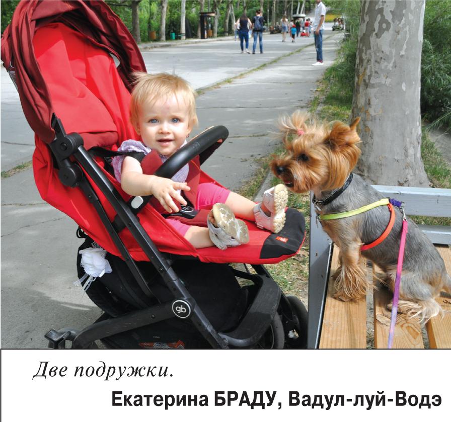 """""""Перья, лапы и хвосты"""" (КОНКУРС)"""