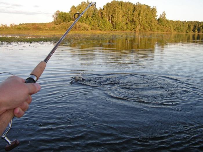 Внимание, рыбаки! Ловля двух видов сельди будет временно запрещена (DOC)