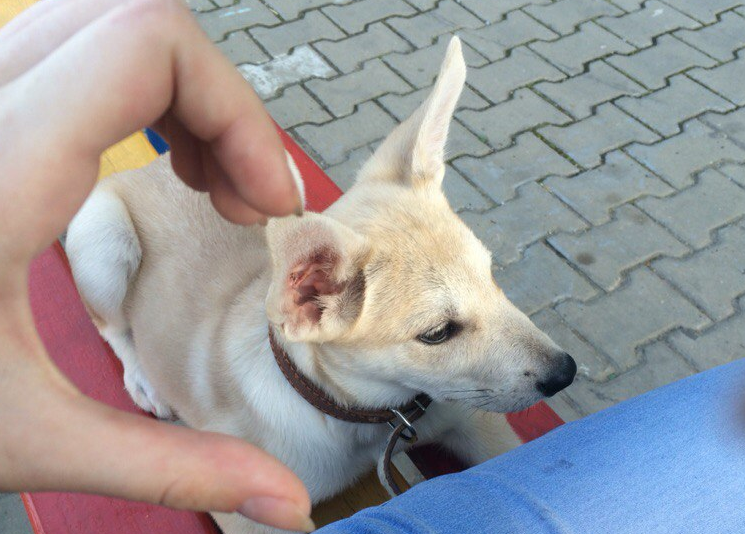 Убийство домашних животных может стать уголовно наказуемым в Молдове